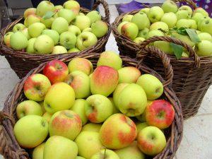 Eigenes Obst - Apfelernte - Selbstversorger
