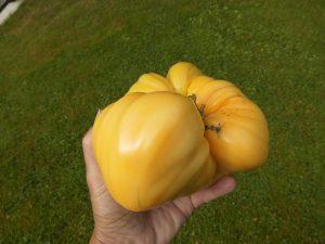 Cleota Yellow