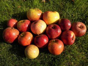 heimische Äpfel