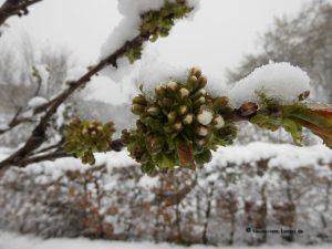 Schnee Ende April